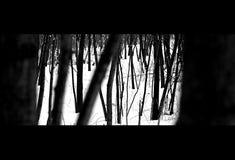 Winter-Bäume Lizenzfreie Stockbilder
