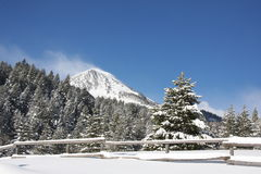 Winter-Bäume   stockbild