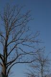 Winter-Bäume Lizenzfreie Stockfotografie