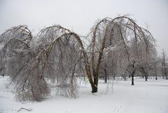 Winter-Bäume Lizenzfreie Stockfotos