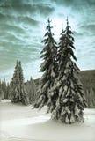 Winter-Bäume Stockfotografie