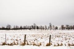 Winter-Bäume in der Landschaft von Kanada Lizenzfreies Stockbild