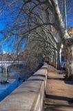 Winter-Bäume lizenzfreies stockbild