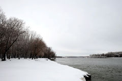 Winter-Bäume und Donau Stockfoto