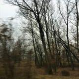 Winter, Bäume und Nebel Stockfotos