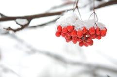 Winter backgournd Royalty Free Stock Photo