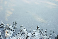 Winter background 1. Ice sheet with some snowed bulrush on the corner royalty free stock images