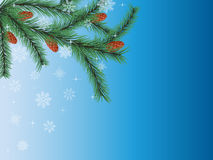 Winter background. With a fir tree. Vector Stock Image