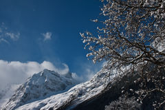 Winter background. Dombay, Caucasus. The image may be used as a kind of winter background Royalty Free Stock Photos