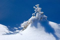 Winter background. A little fir-tree is in snow-drifts. A picture is done in mountains Carpathians, Ukraine Royalty Free Stock Image