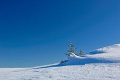Winter background. A little fir-tree is in snow-drifts. A picture is done in mountains Carpathians, Ukraine Stock Photography