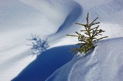 Winter background. A little fir-tree is in snow-drifts. A picture is done in mountains Carpathians, Ukraine stock photos