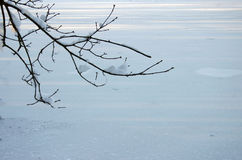 Winter background 2. A single branch on ice background Stock Images