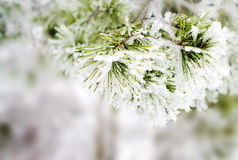 Free Winter Background Stock Photo - 24734520
