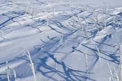 Winter background. Frozen plant on snow Royalty Free Stock Photography