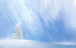 Winter background. Abstract  winter snow background & Christmas tree Royalty Free Stock Photography