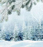 Winter background. Beautiful winter background with branch spruce Royalty Free Stock Images