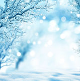 Winter background. Beautiful winter landscape with tree Stock Photo