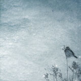 Winter background with bird Royalty Free Stock Photo