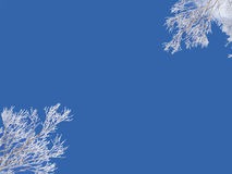 Winter background, blue sky and snowy frozen tree Stock Photo