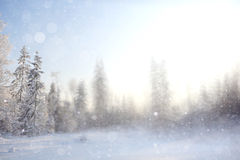 Winter background blur forest Royalty Free Stock Photo
