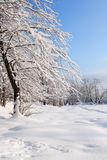 Nice Winter Background Royalty Free Stock Photo