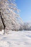 Nice Winter Background Royalty Free Stock Photo