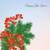 Winter background with  branches rowan berry Stock Image
