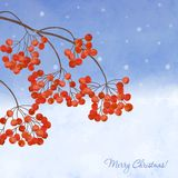 Winter background with  branches rowan berry Stock Photo
