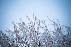 Winter background with brunches in blue Royalty Free Stock Photos