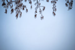 Winter background with brunches in blue Stock Images