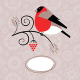Winter background with bullfinch and ashberry Stock Photos