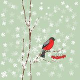 Winter background with bullfinch in vector Stock Photo