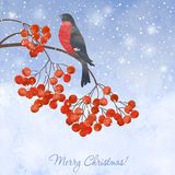 Winter background with bullfinch. Winter watercolor  card  with bullfinch on a branch of rowan Royalty Free Stock Image