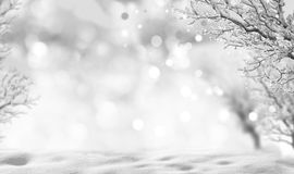 Winter background. Winter christmas background with trees covered by snow Royalty Free Stock Images