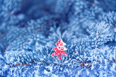 Winter background, close up of frosted pine branch on a snowing Royalty Free Stock Photo
