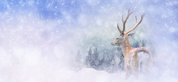 Winter background with deer Royalty Free Stock Photo
