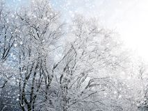 Winter background with falling snow Stock Images