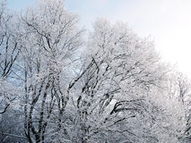 Winter background with falling snow Stock Photos