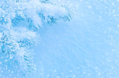 Winter Background. Festive winter background with snow-covered pine branches Stock Images