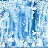 Winter background of fir branches. Christmas vector background with fir tree branches frame Royalty Free Stock Photos