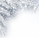Winter background with fir branches. Gray winter background with fir branches and snow. Vector illustration Stock Photos