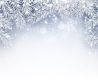 Winter background with fir branches Stock Image