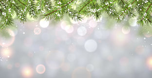 Winter background with fir branches. Stock Image