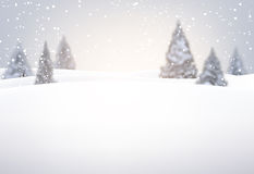 Winter background with fir trees. Royalty Free Stock Image