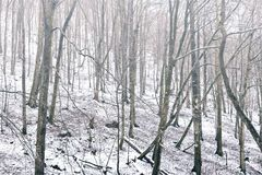 Winter background foggy forest Stock Photography
