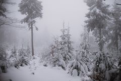 Winter background, forest in snow and ice Royalty Free Stock Photo