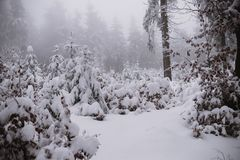Winter background, forest in snow and ice Stock Images
