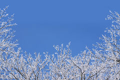 Winter background with a frame of snow covered bare branches aga Stock Image