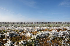 Winter background with frost grass and snowdrift barrier Stock Image